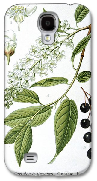 Native Drawings Galaxy S4 Cases - Bird Cherry Cerasus padus or Prunus padus Galaxy S4 Case by Anonymous