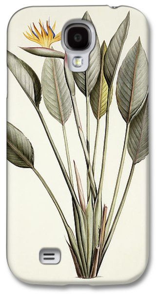 19th Century Galaxy S4 Cases - Bird of Paradise Galaxy S4 Case by Pierre Joseph Redoute