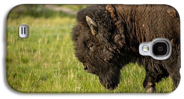 Animal Pyrography Galaxy S4 Cases - Bison in Yellowstone Galaxy S4 Case by Lavold Photography