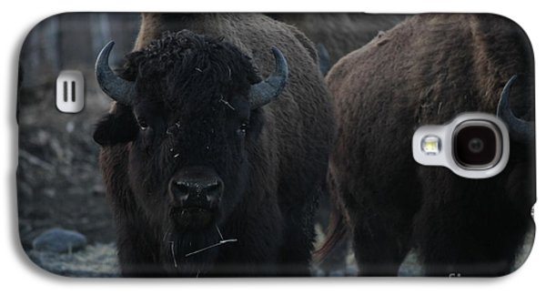 Bison Mixed Media Galaxy S4 Cases - Bison Galaxy S4 Case by Shiela  Mahaney