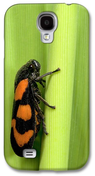 Black And Red Froghopper Galaxy S4 Case by Nigel Downer