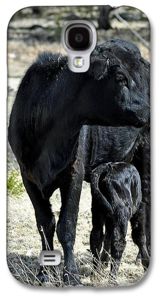 Black Angus Galaxy S4 Cases - Black Angus Galaxy S4 Case by Juls Adams