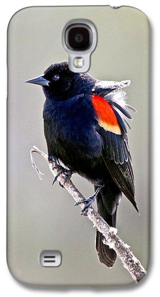 Butterfly Prey Galaxy S4 Cases - Black Bird Galaxy S4 Case by Athena Mckinzie