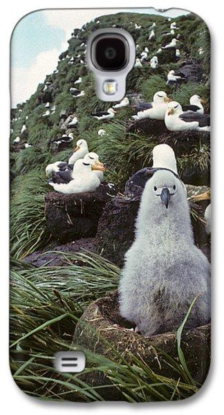 Mud Nest Galaxy S4 Cases - Black-browed Albatross Chick Sitting On Galaxy S4 Case by Joel Bennett