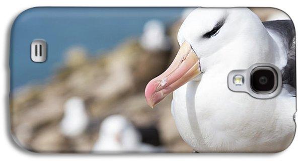 Black-browed Albatross (thalassarche Galaxy S4 Case by Martin Zwick