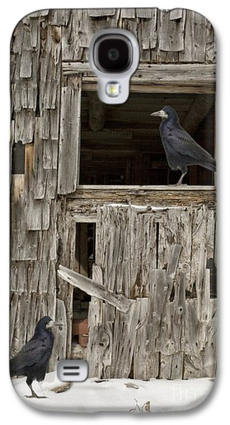 Crows Galaxy S4 Cases - Black crows at the old barn Galaxy S4 Case by Edward Fielding
