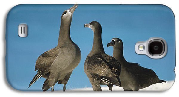 Wildlife Celebration Galaxy S4 Cases - Black-footed Albatross Gamming Group Galaxy S4 Case by Tui De Roy