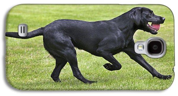 Black Labrador Playing Galaxy S4 Case by Johan De Meester