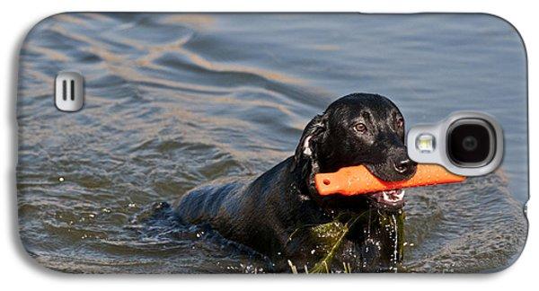 Water Retrieve Galaxy S4 Cases - Black Labrador Retriever, Retrieving Galaxy S4 Case by William H. Mullins