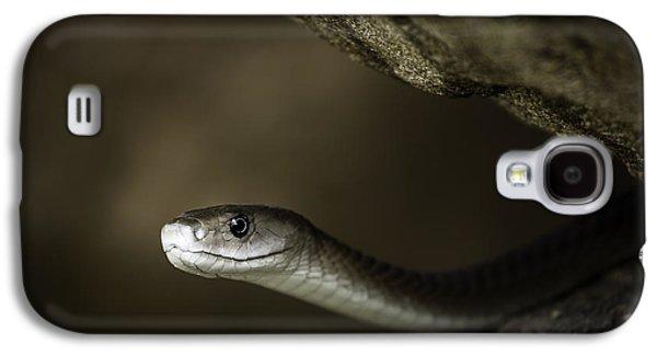 Black Mamba Galaxy S4 Cases - Black Mamba on rock Galaxy S4 Case by Rick Budai
