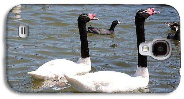 Swan Pair Galaxy S4 Cases - Black-necked Swans Galaxy S4 Case by Carol Groenen