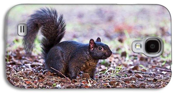 Black Squirrel On The Ground Galaxy S4 Case by John Devries