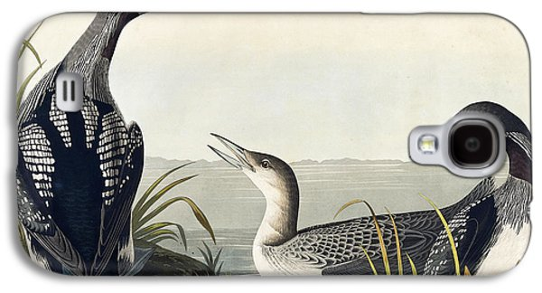 Loon Galaxy S4 Cases - Black throated Diver  Galaxy S4 Case by John James Audubon