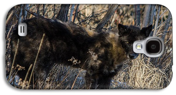 Bwcaw Galaxy S4 Cases - Black Timber Wolf Galaxy S4 Case by David Johnson