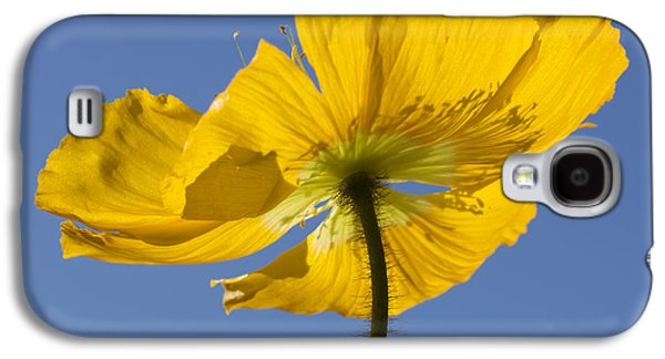 Close Focus Nature Scene Galaxy S4 Cases - Bloom Time Galaxy S4 Case by Heidi Smith
