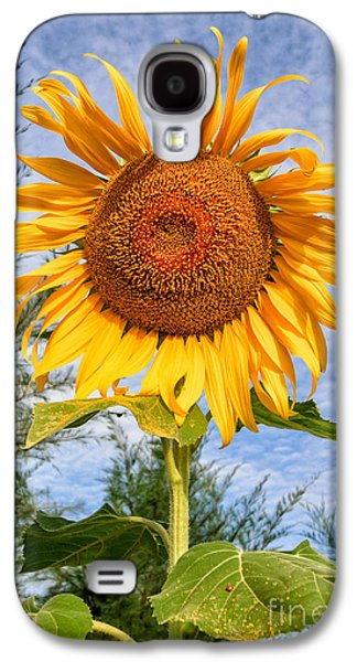 Stigma Galaxy S4 Cases - Blooming Sunflower V2 Galaxy S4 Case by Adrian Evans