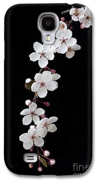 Cherry Tree Galaxy S4 Cases - Blossom on Black Galaxy S4 Case by Tim Gainey