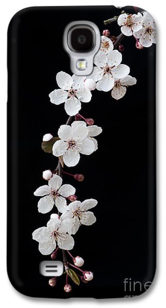 Fruit Tree Galaxy S4 Cases - Blossom on Black Galaxy S4 Case by Tim Gainey