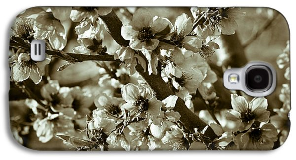 Fruit Tree Art Galaxy S4 Cases - Blossoms Galaxy S4 Case by Frank Tschakert