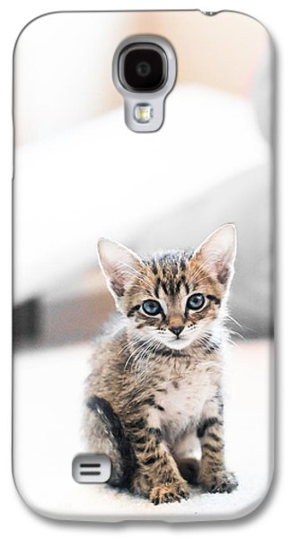 Rainy Day Photographs Galaxy S4 Cases - Blue Eyed Kitten Galaxy S4 Case by Shelby  Young