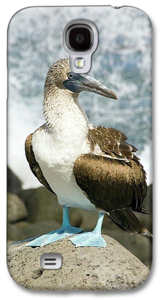 Blue-footed Booby Galaxy S4 Case by Daniel Sambraus