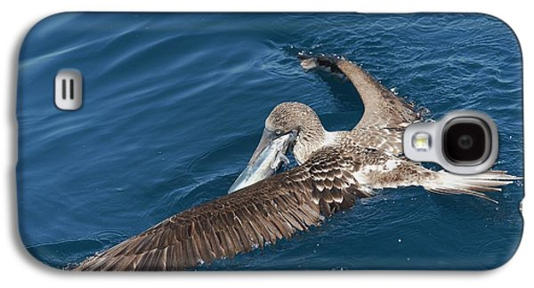 Blue-footed Booby Feeding Galaxy S4 Case by Christopher Swann
