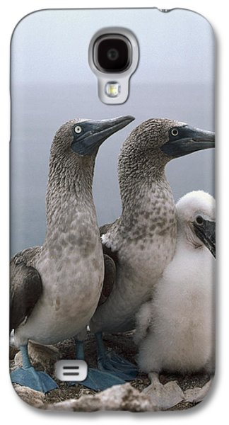 Three Chicks Galaxy S4 Cases - Blue-footed Booby Pair With Chick Galaxy S4 Case by Tui De Roy