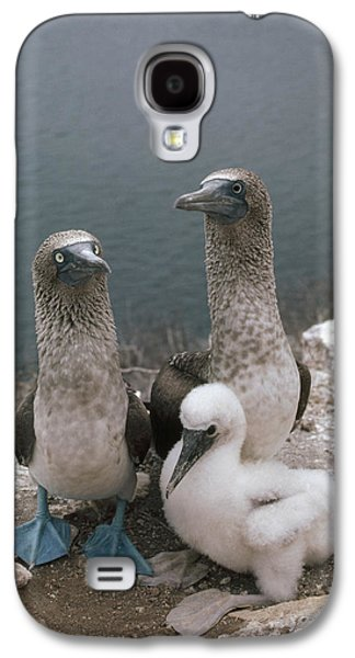 Three Chicks Galaxy S4 Cases - Blue-footed Booby Parents With Chick Galaxy S4 Case by Tui De Roy