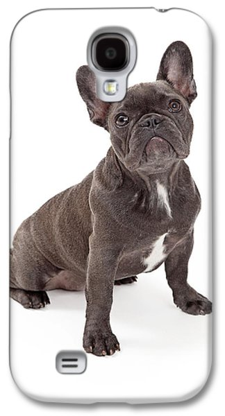 Recently Sold -  - Studio Photographs Galaxy S4 Cases - Blue French Bulldog  Galaxy S4 Case by Susan  Schmitz