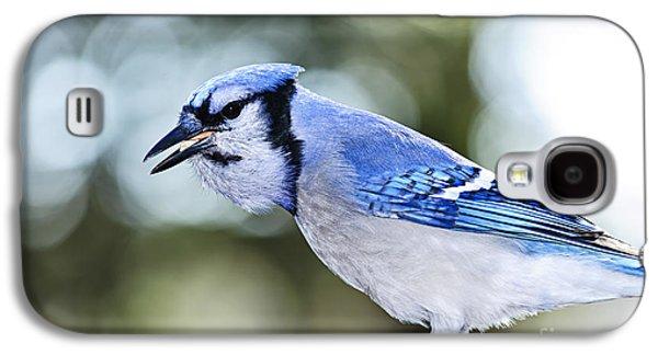 Feeding Galaxy S4 Cases - Blue jay bird Galaxy S4 Case by Elena Elisseeva