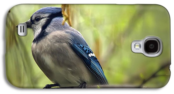 Blue Jay On A Misty Spring Day Galaxy S4 Case by Lois Bryan