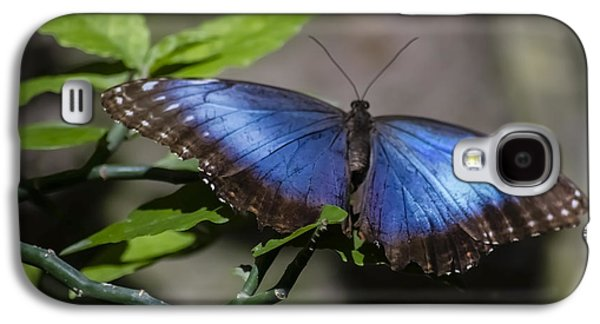 Morph Galaxy S4 Cases - Blue Morph butterfly Galaxy S4 Case by Sven Brogren