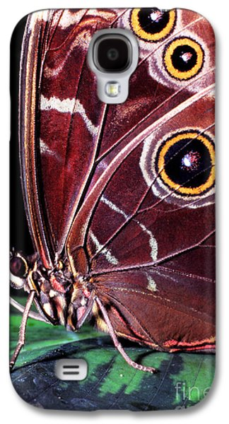 Butterfly Prey Galaxy S4 Cases - Blue Morpho Butterfly Galaxy S4 Case by Thomas R Fletcher