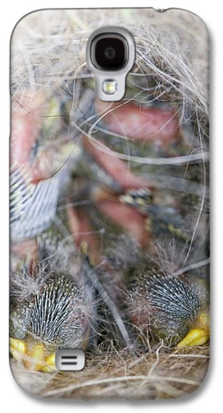 Blue Tit Chicks In A Nest Box Galaxy S4 Case by Ashley Cooper