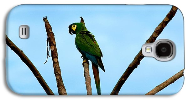 Blue-winged Macaw, Brazil Galaxy S4 Case by Gregory G. Dimijian, M.D.