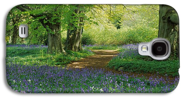 Locations Galaxy S4 Cases - Bluebells In A Forest, Thorp Perrow Galaxy S4 Case by Panoramic Images