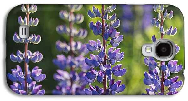 Sunlight On Flowers Galaxy S4 Cases - Bluebonnet Lupine _lupinus Galaxy S4 Case by Carl Bruemmer