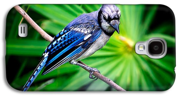 Thoughtful Bluejay Galaxy S4 Case by Mark Andrew Thomas