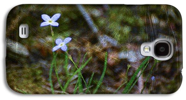 Quaker Digital Galaxy S4 Cases - Bluets Woodland Dream Galaxy S4 Case by Kerri Farley