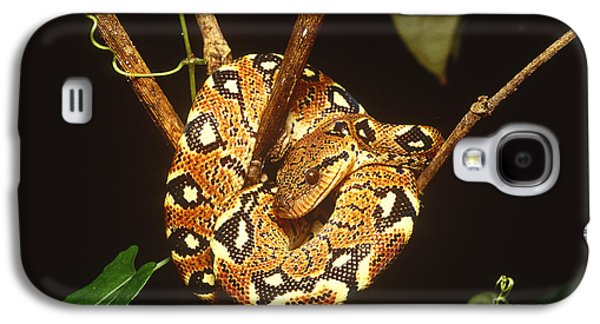 Boa Constrictor Galaxy S4 Case by Art Wolfe