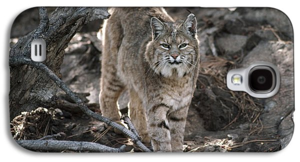 Lynx Rufus Galaxy S4 Cases - Bobcat Adult Portrait Montana Galaxy S4 Case by Tim Fitzharris