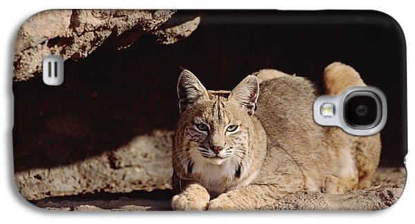 Lynx Rufus Galaxy S4 Cases - Bobcat Adult Resting On Rock Ledge Galaxy S4 Case by Tim Fitzharris
