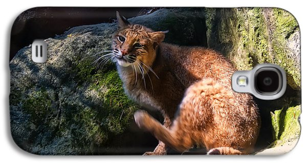 Bobcat Grooming Itself Galaxy S4 Case by Chris Flees
