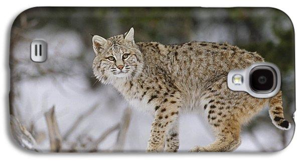 Lynx Rufus Galaxy S4 Cases - Bobcat In Winter Colorado Galaxy S4 Case by Konrad Wothe