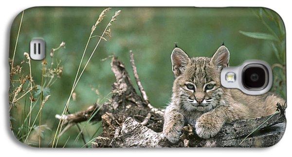 Lynx Rufus Galaxy S4 Cases - Bobcat Kitten Resting On A Log Idaho Galaxy S4 Case by Michael Quinton