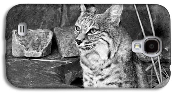 Bobcats Galaxy S4 Cases - Bobcat Galaxy S4 Case by Nikolyn McDonald