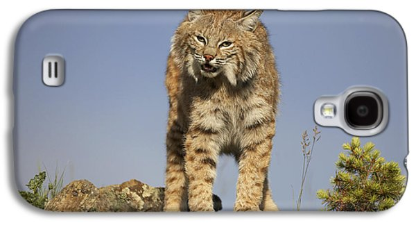 Lynx Rufus Galaxy S4 Cases - Bobcat North America Galaxy S4 Case by Tim Fitzharris