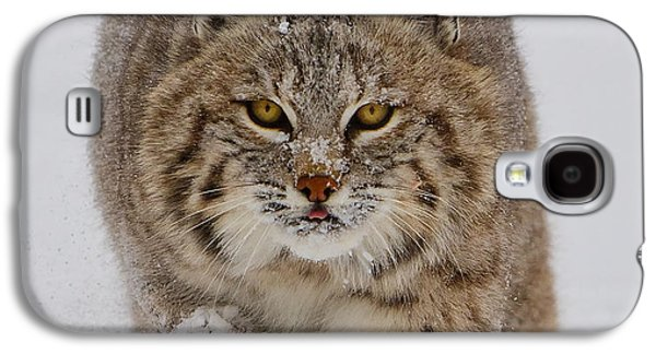 Bobcat Running Forward Galaxy S4 Case by Jerry Fornarotto