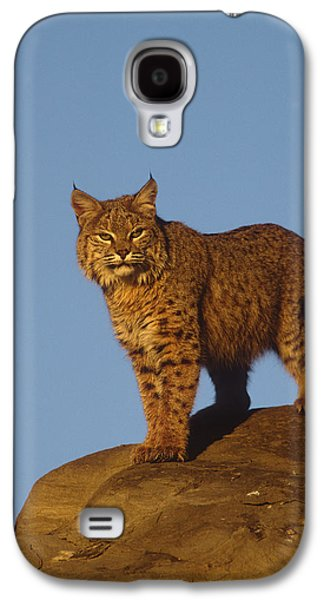 Lynx Rufus Galaxy S4 Cases - Bobcat Galaxy S4 Case by Tom Vezo