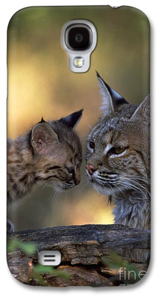 Bobcats Photographs Galaxy S4 Cases - Bobcat With Kitten Galaxy S4 Case by Art Wolfe
